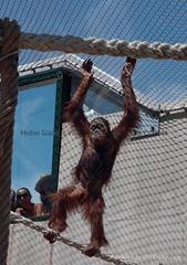 动物园钢丝绳网