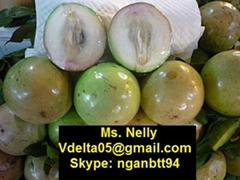 Vietnamese Star Apple