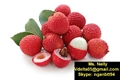 Vietnamese lychee ( fresh or IQF or