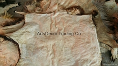 DRY SALTED GOAT SKINS