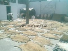 Salted sheep Skins