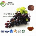 Grape Seed Extract 2