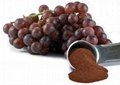 Water Soluble OPC 25%-98% Grape Seed Extract Polyphenol 40%-95% with High ORAC V 1
