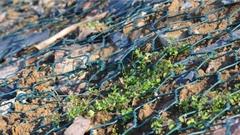Gabion Hexagonal Wire Mesh Bakeart steel gabion