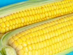 Yellow Corn # 3