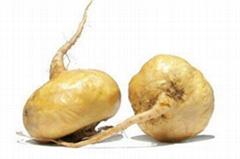 天然植物提取 保健品原料 瑪卡提取物 10:1
