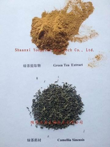 Good Quality Green Tea Extract 2