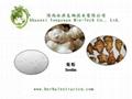 天然植物提取物 菊粉90% 菊苣根提取物 1
