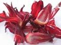 純天然植物提取 質優價廉 玫瑰茄提取物  2