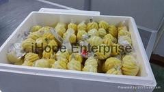PREMIUM Frozen pineapple / PHULAE Variety, / Northern TH