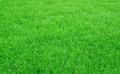 天津人造草 2