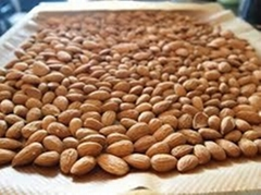 Almond Nuts, Best Quality Almond Nuts,