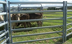 metal pipe oval rails portable cattle yard panel
