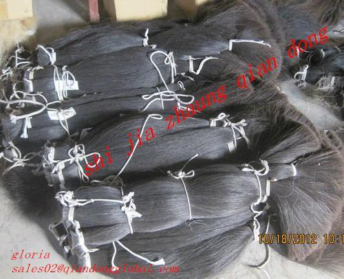 black horse tail hair 1