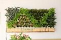都市绿缘智能绿植壁挂垂直绿化绿