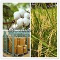 insecticides imidacloprid 95%TC&98%TC 2