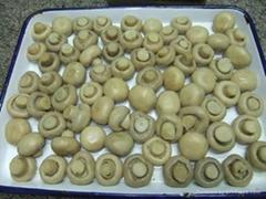 Canned Mushroom