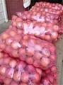 陝西紅富士蘋果價格 1