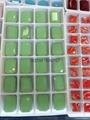玻璃水晶玉鑽 5