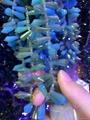 玻璃水晶串珠 3