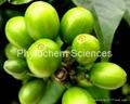 绿咖啡豆提取物 2