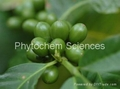 Green Coffee Bean Extract 3