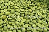 绿咖啡豆提取物 4