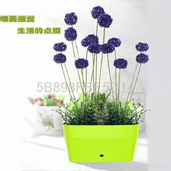 personal gift water pot,small plastic flower pot