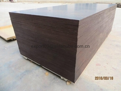 KANGAROO  BRAND FILM FACED PLYWOOD