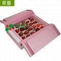 草莓包裝箱吸水紙 3