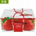 草莓包裝箱吸水紙 4
