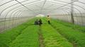 greenhouse net meyabond