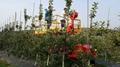 Wheel type self popelled type garden work platform  WL-160 5