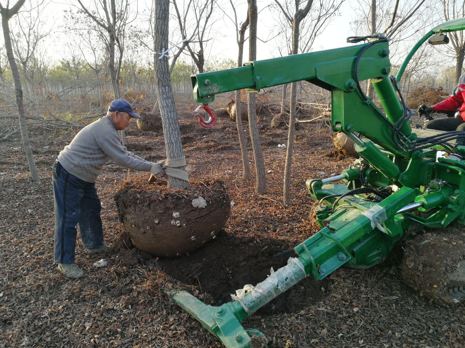crawler Tree spade or tree transplanter used in Garden 8
