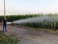pesticide sprayer gun work effect