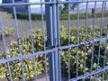 鼎萨双横丝护栏网 2
