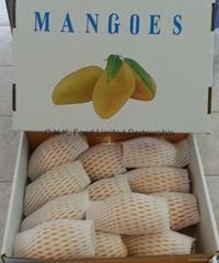 Thai Yellow Mango