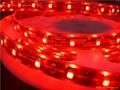 供應LED5050紅光軟燈條 60燈燈/米 IP65防水12V 2