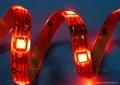供應LED5050紅光軟燈條 60燈燈/米 IP65防水12V 3