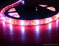 供應LED5050紅光軟燈條