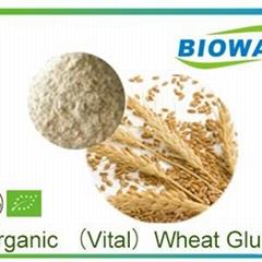 Organic Wheat Gluten