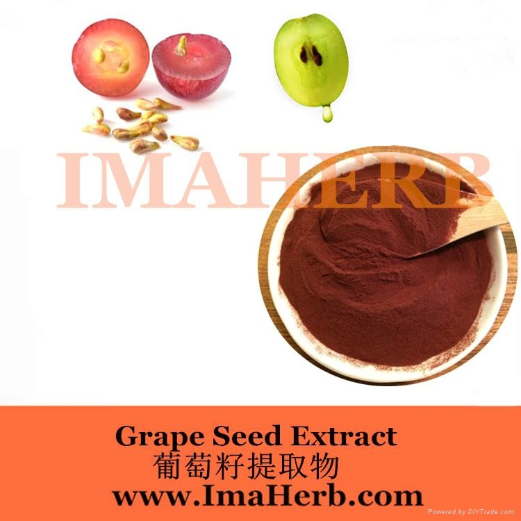 Grape Seed Extract OPC  1