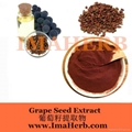 Grape Seed Extract OPC  4