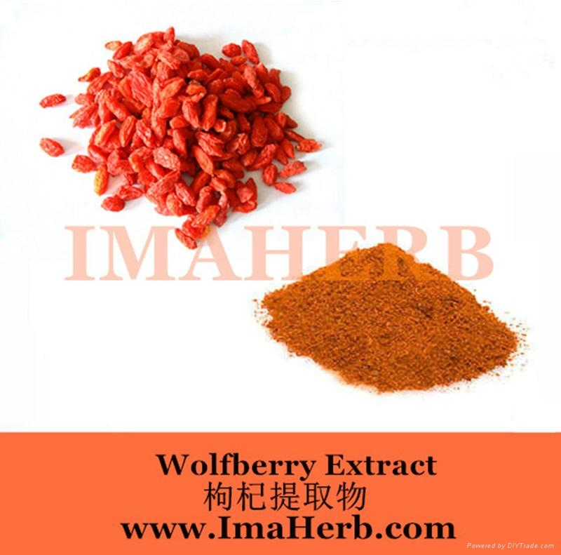 Wolfberry Extract- goji berry extract 3