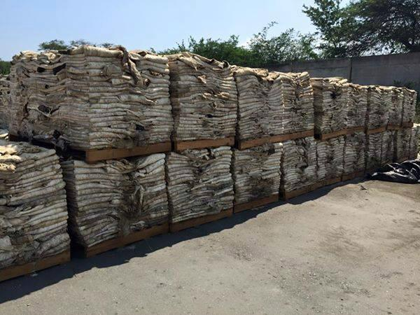 100% High Quality Wholesale Wet and Salted Donkey Hides 1