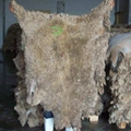 100% High Quality Wholesale Wet and Salted Donkey Hides 2