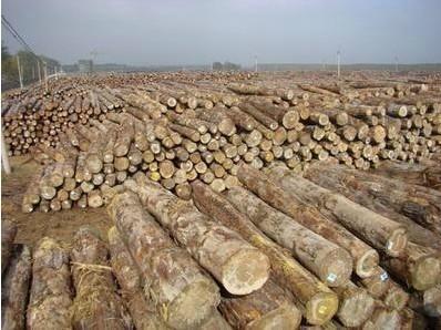 特价木材进口代理清关 4