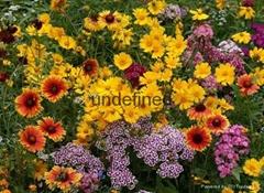 供應野花組合種子