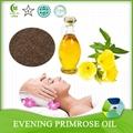 Refined and Unrefined Evening Primrose