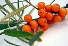 Factory Supply Natural Seabuckthorn Fruit Oil Berry Oil With Competitive Price B